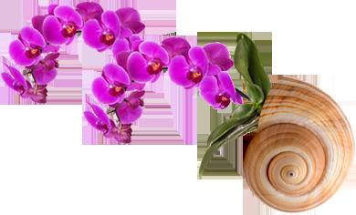 caracola con flores
